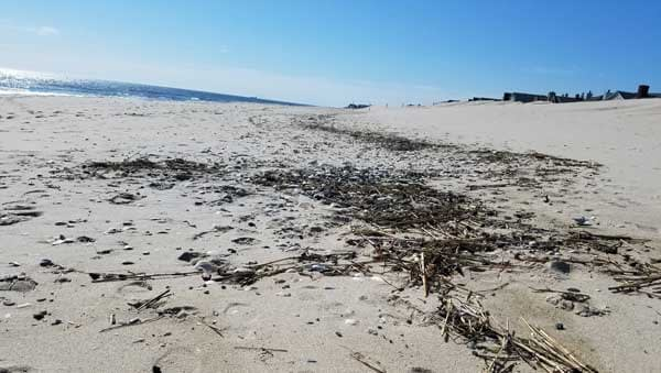 Sand and line of ocean debris along the beach in Bay Head New Jersey.
