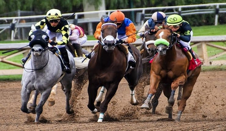 Horse Network Tipster Review