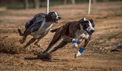 Greyhound System Review