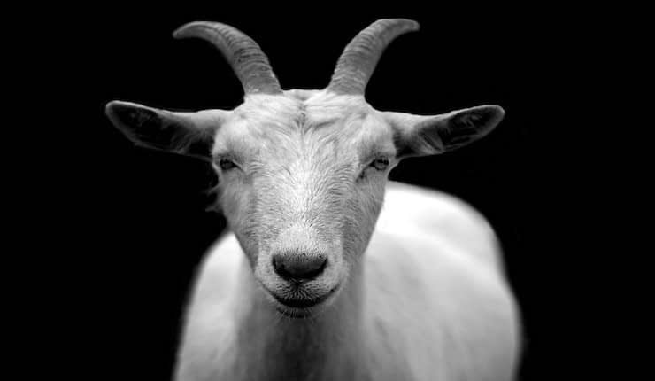 The Goat Review