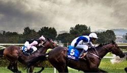 horsecashbuilder-review-image