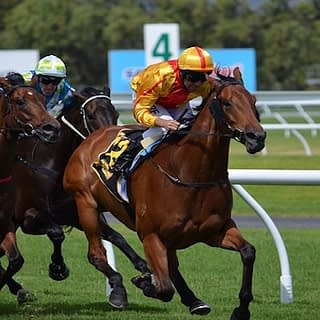 Value Backing Review Horse Betting