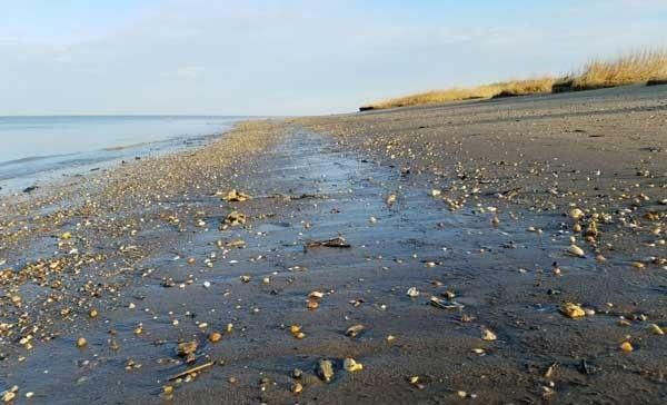 woodland-beach-delaware