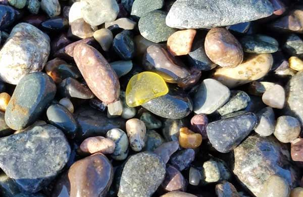 Yellow sea glass in pebbles on 40 Steps Beach, Nahant, Massachusetts.